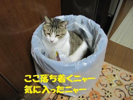 IMG_2548 ちろ ゴミ箱