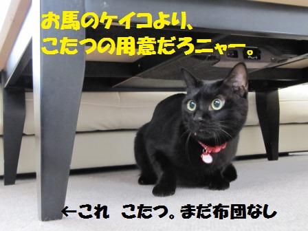 IMG_2608 こたつ