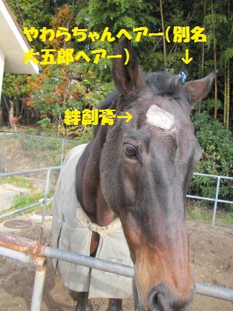 IMG_2713-おさじ