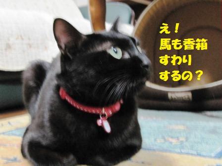 IMG_2601 え 香箱