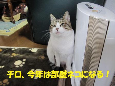 IMG_2820ちろ すとーぶ