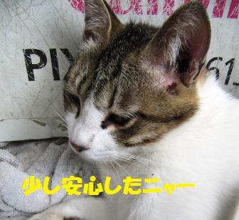 IMG_2229-3.jpg