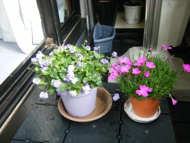 新しいイメージ花