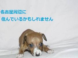 4_20120527150821.jpg