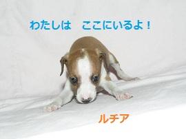 5_20120527150821.jpg
