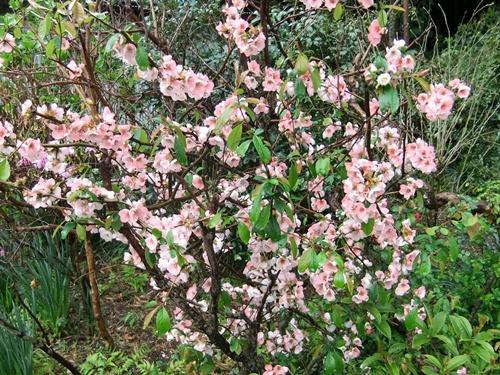 2012.4.23 春の庭の花たち 001