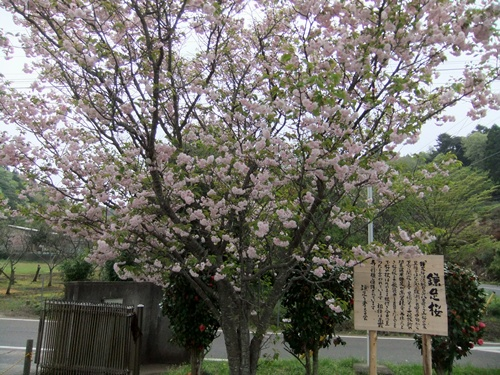 2012.4.28 春のふるさと歩き 034 (1)