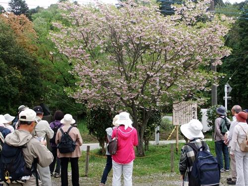 2012.4.28 春のふるさと歩き 034