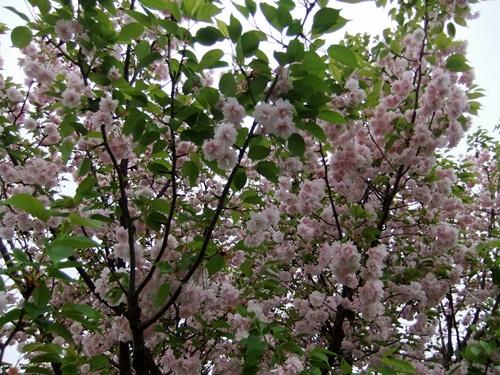 2012.4.28 春のふるさと歩き 034 (12)