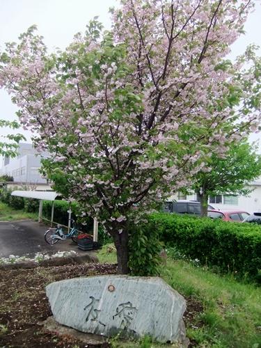 2012.4.28 春のふるさと歩き 034 (10)