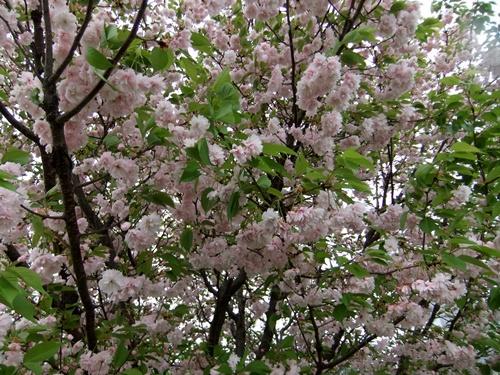 2012.4.28 春のふるさと歩き 034 (11)