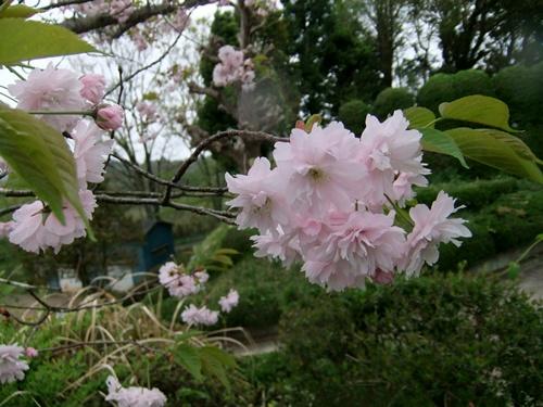 2012.4.28 春のふるさと歩き 034 (8)