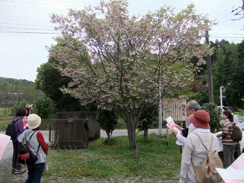 2012.4.28 春のふるさと歩き 034 (18)