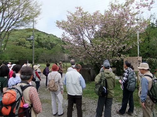 2012.4.28 春のふるさと歩き 034 (17)