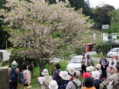 2012.4.28 春のふるさと歩き 034 (24)