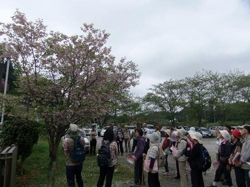 2012.4.28 春のふるさと歩き 034 (22)