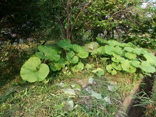 2012.5.10 朝の田まわり風景 019