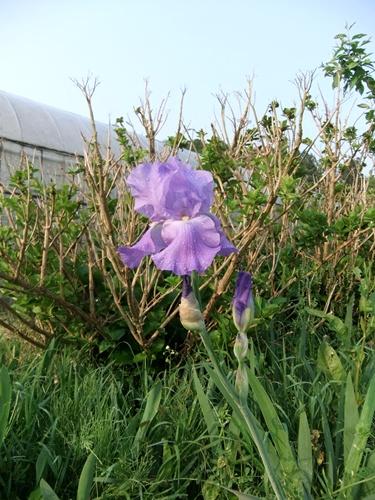 2012.5.10 朝の田まわり風景 018