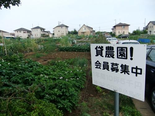 2012.5.26 貸し農園(袖ヶ浦) 013