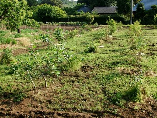 2012.6.1 初夏の野菜畑(第2回) 037 (5)