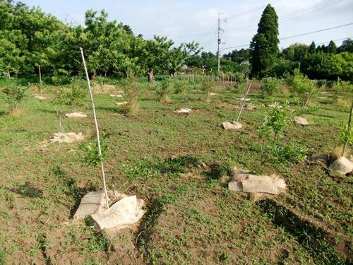 2012.6.1 初夏の野菜畑(第2回) 037 (2)