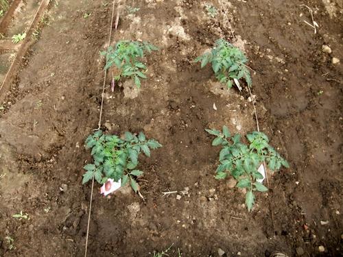 2012.6.1 初夏の野菜畑(第2回) 037