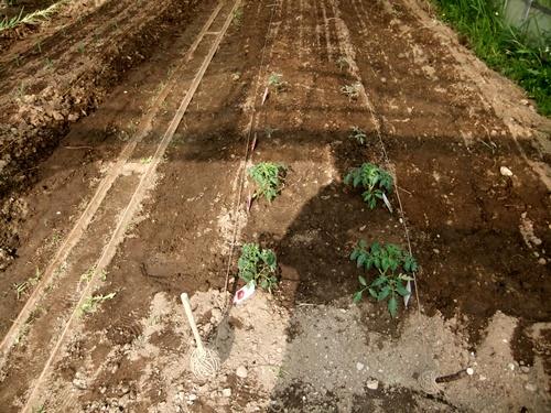 2012.6.1 初夏の野菜畑(第2回) 037 (13)