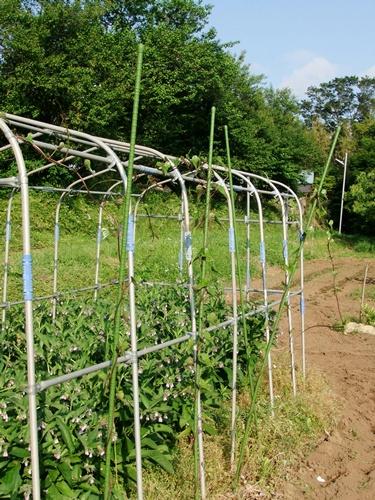 2012.6.1 初夏の野菜畑(第2回) 037 (7)