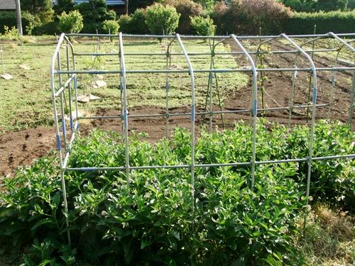 2012.6.1 初夏の野菜畑(第2回) 037 (6)