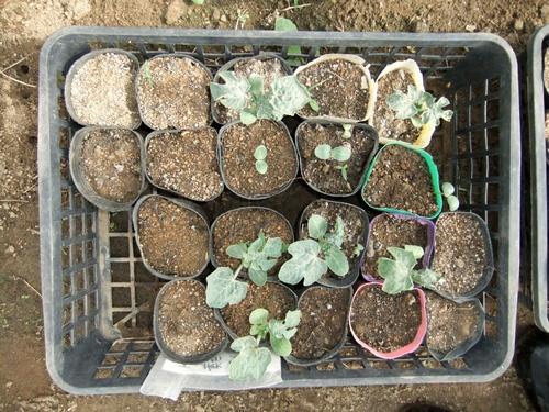 2012.6.1 初夏の野菜畑(第2回) 037 (19)