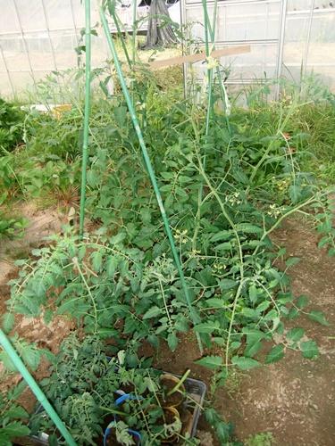 2012.6.1 初夏の野菜畑(第2回) 037 (20)