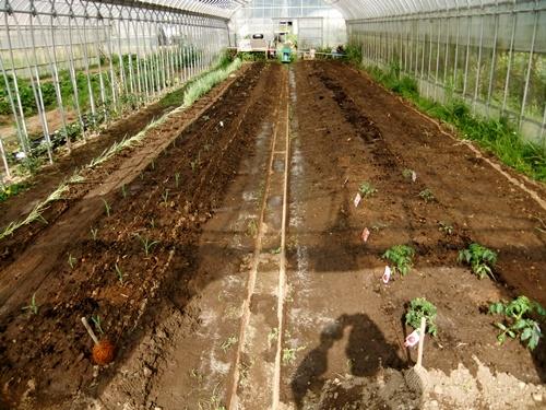 2012.6.1 初夏の野菜畑(第2回) 037 (30)