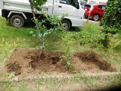2012.6.8 公民館の花壇 009 (4)