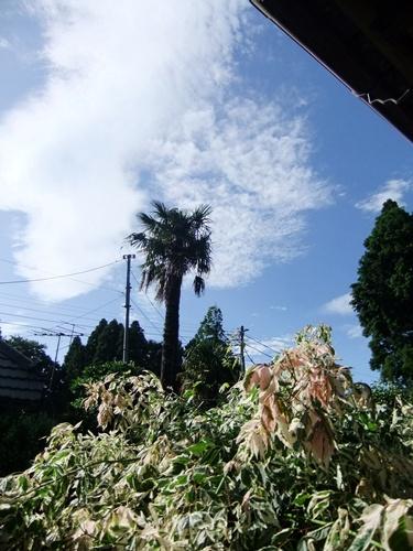 2012.6.20 台風4号の後 079 (1)