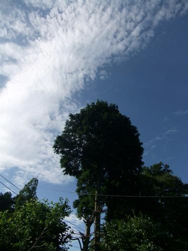 2012.6.20 台風4号の後 079
