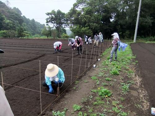2012.7.8 ファーマーズクラブ大豆種まき 001 (36)
