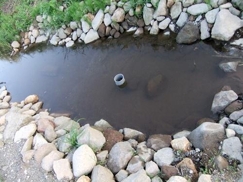 2012.7.8 ビオトープ池 001 (84)