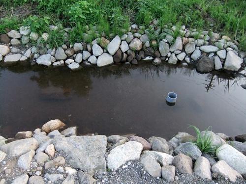 2012.7.8 ビオトープ池 001 (83)
