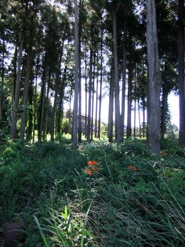 2012.7.17 夏の野草の花 020 (1)