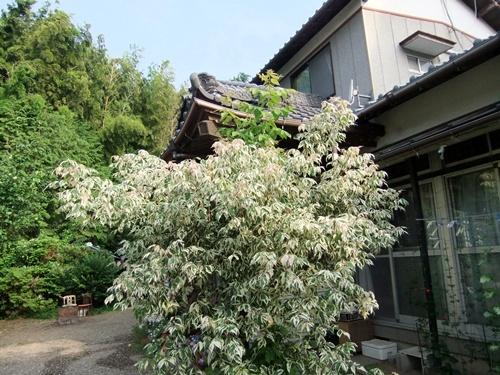 2012.7.18 野良黒 031