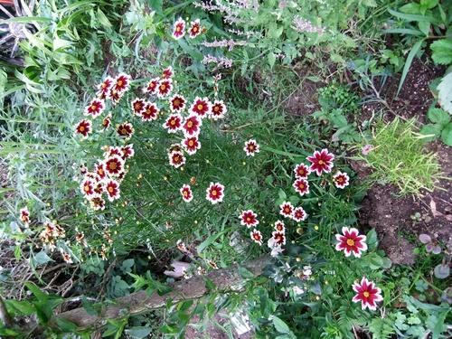 2012.7.19 きれいな花たち 001