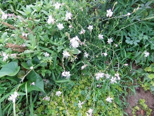 2012.7.19 きれいな花たち 001 (1)
