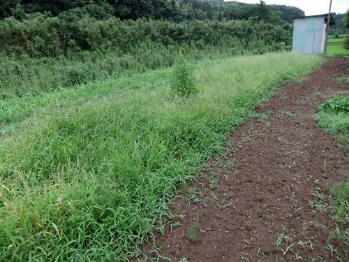 2012.7.21 梅雨明け後の野菜たち 043