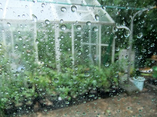 2012.8.18 雨の庭 018 (3)