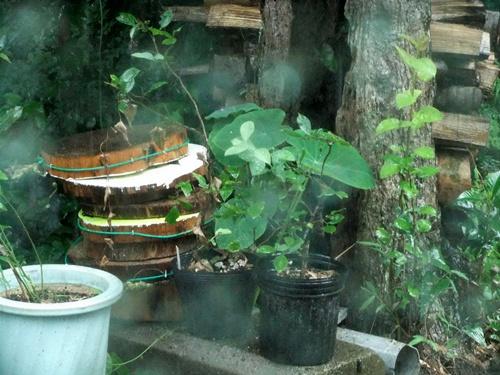 2012.8.18 雨の庭 018