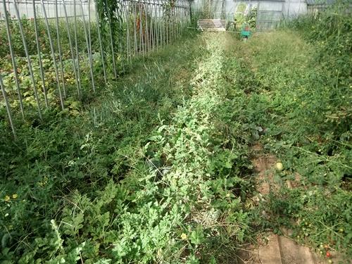 2012.9.12 9月の野菜・果樹 050 (22)