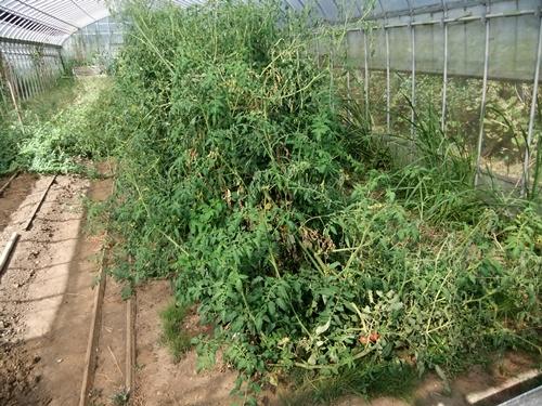 2012.9.12 9月の野菜・果樹 050 (21)