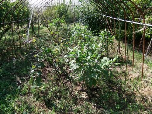 2012.9.12 9月の野菜・果樹 050 (17)