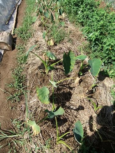 2012.9.12 9月の野菜・果樹 050 (41)