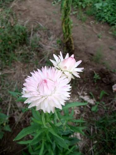 2012.9.23 ママさんの圃場 008 (11)